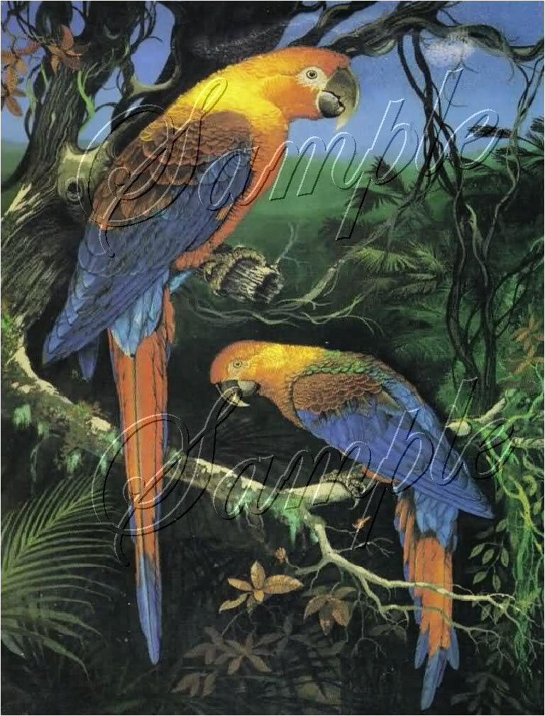 VINTAGE PARROTS CUBAN MACCAW BIRDS CANVAS ART - LARGE