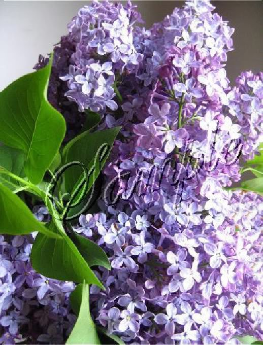 VICTORIAN LILACS SPRING FLOWERS PHOTO CANVAS ART PRINT