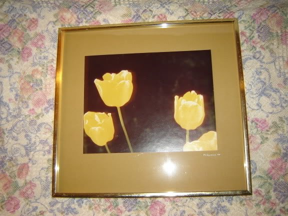 Vintage Framed Yellow Tulips Original Photograph 1977