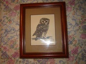 Steve Carter Pen & Ink Print Saw-Whet Owl Framed