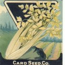 1920's Card seed Company seed packet Celery golden self blanching
