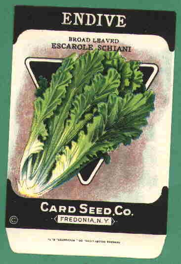 1920's Card seed Company seed packet Endive