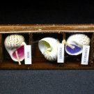 Seashell candles with display box set of five (5) NOS