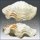 3D silicone Soap/polymer/clay/cold porcelain mold-Fluted Giant Clam Shell