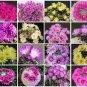 Mammillaria MIX @ pincushion rare cactus seed 300 SEEDS