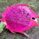 Dragon fruit purple flesh pitaya exotic edible sweet cactus seed  @ 1000 seeds P