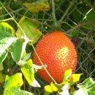 GAC @ Momordica cochinchinensis fruit rare seed 2 SEEDS