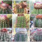 Melocactus variety MIX cacti rare cactus seed 100 SEEDS