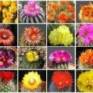 PARODIA VARIETY MIX FLOWERING CACTUS SEED 30 SEEDS LOOK