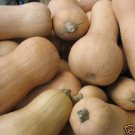 Butternut Pumpkin seed, calabaza good to eat 20 seeds