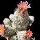 Escobaria sneedii, cacti rare cactus aloe seed 10 SEEDS