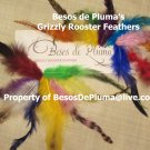 10 GRIZZLY ROOSTER FEATHERS for Hair Extensions purple Yellow pink Green Long and Short