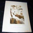Antique Entomology Insect Joutel Chromo-Litho Plate