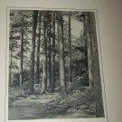 Vintage 1940s Woodland Path Forrest Photograph Photo