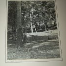 Vintage 1940s October Sunshine Forest Trees Photograph Photo