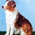 AUSTRALIAN SHEEP DOG FIGURINE (5468s)