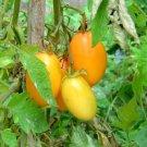 Orange Banana Tomato 20 seeds