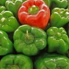 California Wonder Green Bell Pepper 20 seeds