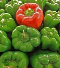 California Wonder Green Bell Pepper 20 seeds