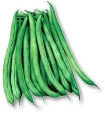 Blue Lake Bush Beans 25 Heirloom seeds