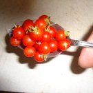 Spoon Tomato 20 seeds