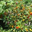 Bolivian Rainbow pepper *HOT*
