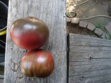 Berkley Pink Tye Dye tomato 20 seeds