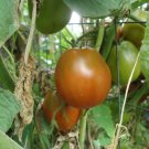 Japanese black trifle tomato 20 seeds