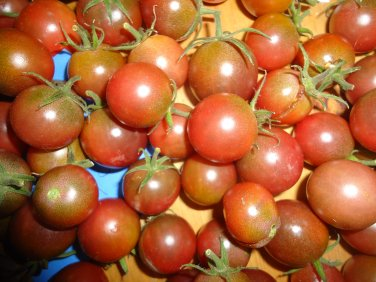 Chocolate Cherry tomato 20 seeds *HEIRLOOM* Humans who CARE