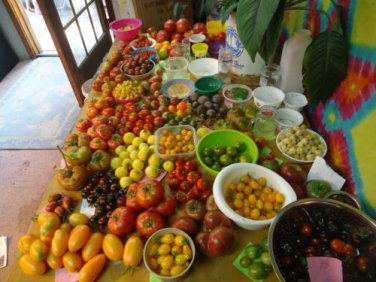 Heirloom Tomato Variety Pack #2