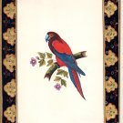 Parrot Bird Miniature Painting Handmade Indian Nature Ethnic Wild Life Artwork