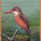 Ruddy Kingfisher Bird Art Hand painted Indian Miniature Wild Life Painting