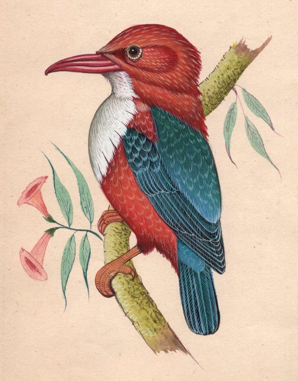 Kingfisher Bird Miniature Painting Hand Painted Indian Nature Ornithology Art