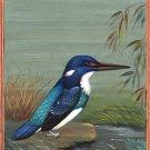 Blue Banded Kingfisher Painting Handmade Indian Miniature Wild Life Nature Art