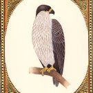 Indian Eagle Bird of Prey Miniature Painting Handmade Watercolor Ornithology Art