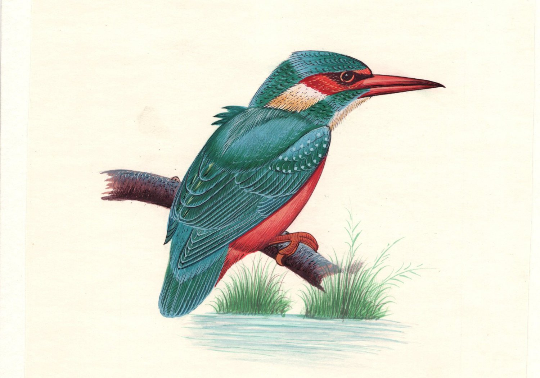 Kingfisher Bird Miniature Painting Handmade Watercolor Paper Ethnic Folk Art