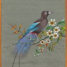 Prince Rudolph Blue Bird of Paradise Painting Handmade Indian Miniature Folk Art