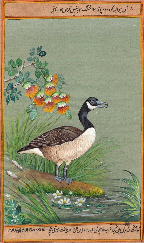 Canada Goose Painting Handmade Indian Miniature North American Wild Bird Art