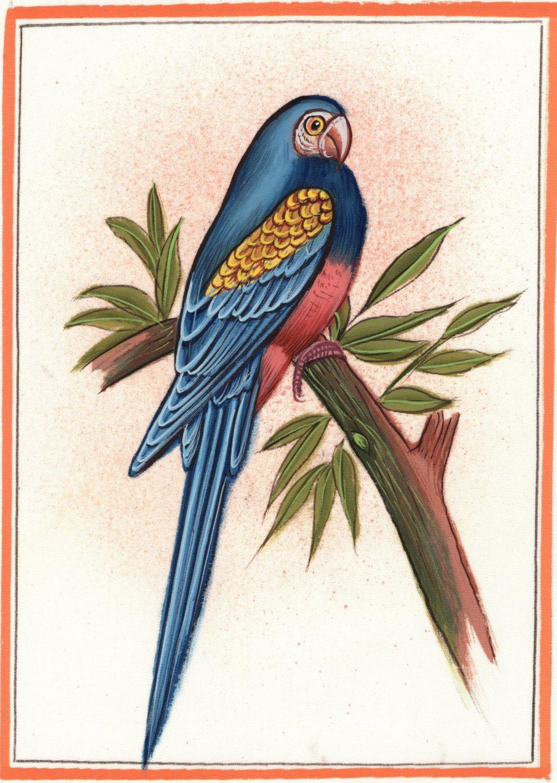 Parrot Bird Painting Handmade Watercolor Indian Miniature Ethnic Folk Decor Art