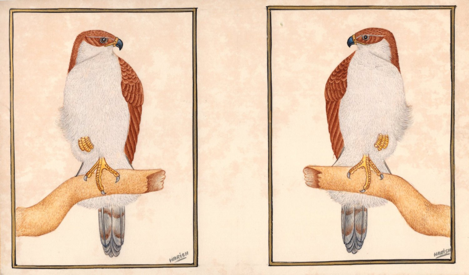 Eagle Bird of Prey Art Handmade Indian Miniature Watercolor Ornithology Painting