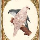 Handmade Indian Birds of Paradise Miniature Watercolor Ornithology Nature Art