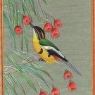 Many-colored Rush Tyrant Painting Handmade Indian Miniature American Bird Art