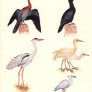 Indian Tropical Birds of Paradise Rare Handmade Miniature Watercolor Artwork