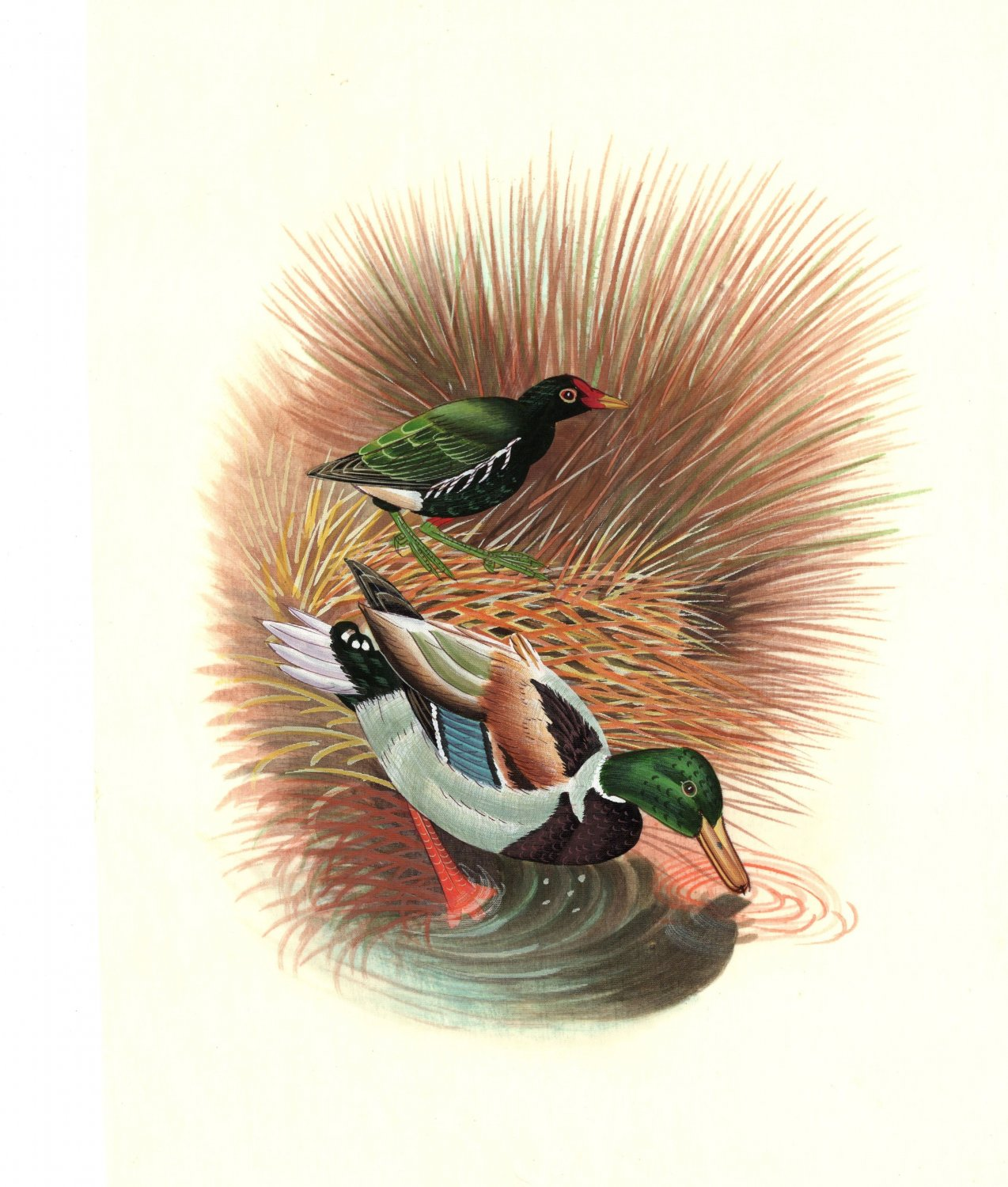 Indian Duck Miniature Painting Fine Hand Painted Watercolor Ethnic Bird Artwork