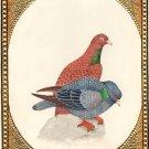 Indian Pigeon Bird of Paradise Art Handmade Miniature Watercolor Ornithology Art