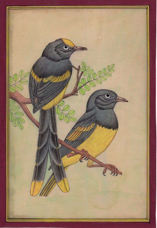Indian Bird of Paradise Miniature Painting Handmade Wild Life Ornithology Art