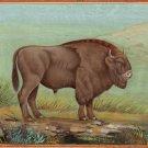 American Bison Buffalo Painting Rare Handmade Wild Animal Indian Miniature Art