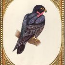 Bird of Prey Hawk Painting Handmade Indian Miniature Watercolor Ornithology Art