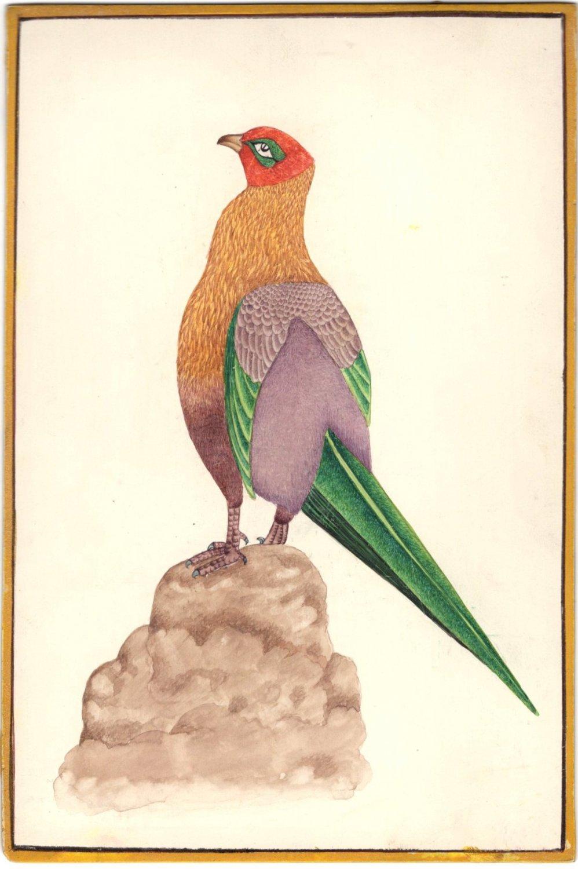 Tropical Long Tail Bird Painting Handmade Indian Nature Miniature Decor Artwork