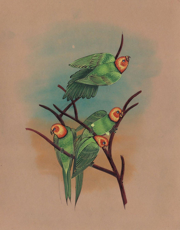 Parrot Flock Bird Painting Handmade Ornithology Indian Miniature Nature Artwork
